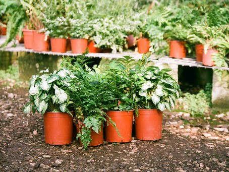 The 2 reasons why gardening seems complicated but isn't...