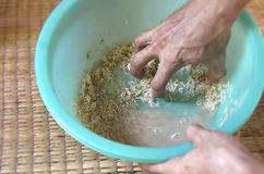 LACTO homemade probiotics - Culture
