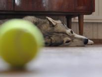 O cachorro, o rabo e a bola: metáforas para a liberdade de mudar