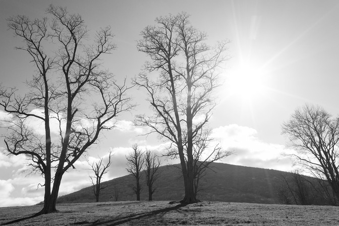 Rays of Sun on Barren Trees