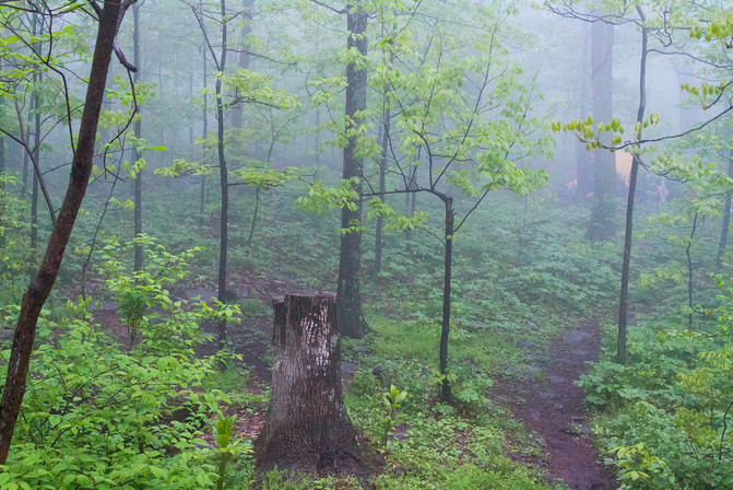 A Foggy Forest on the Appalachian Trail