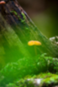 Mushroom and moss growing along the AppalachianTrail