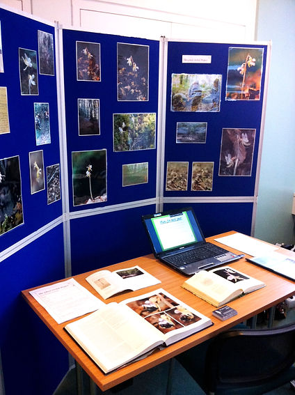 The Ghost Orchid Project BSBI display