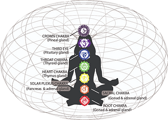chakras%20and%20glands_edited.png