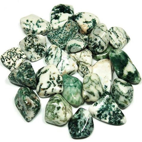 Tree Agate Approximately 1""