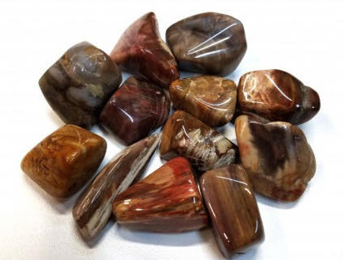 Petrified Wood Approximately 1 1/2""