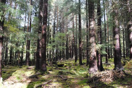 Forest walks