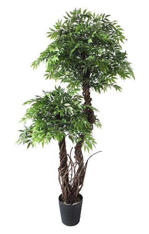Green Fruticosa 165cm