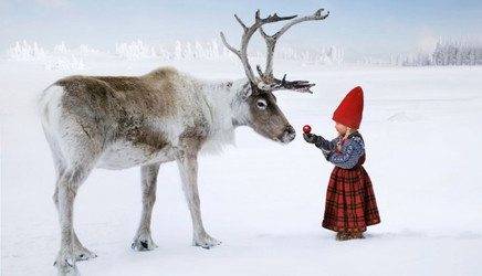 anja_and_the_reindeer-675x387.jpg