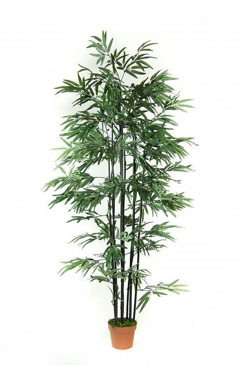 Art Bamboo Nigra 155cm