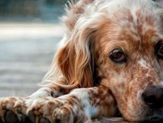 Μυστηριώδεις εξαφανίσεις αδέσποτων ζώων στην περιοχή της Νέας Σμύρνης
