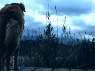 Μια ταινιούλα για τα εγκαταλελειμμένα ζώα