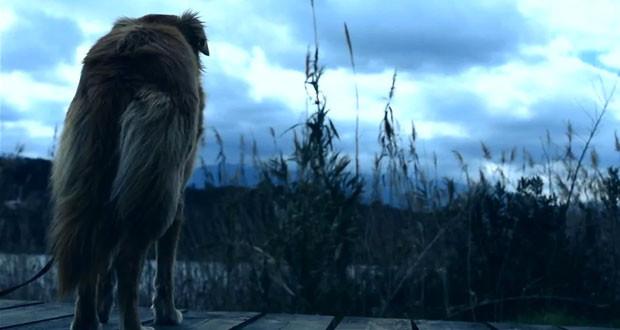 Η Ομπρέλα | Μια ταινιούλα για τα εγκαταλελειμμένα ζώα