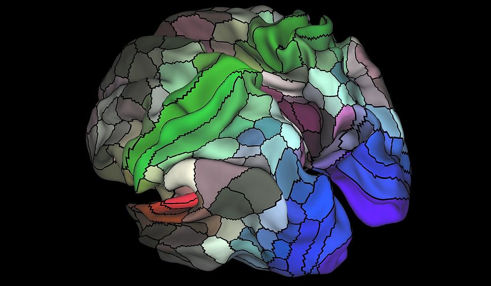 Ένας χάρτης απεικόνισης της μυελίνης (όπου κόκκινο και κίτρινο υπάρχουν υψηλές ποσότητες μυελίνης, όπου λουλακί και μπλε χαμηλές) στο αριστερό ημισφαίριο του εγκεφαλικού φλοιού (Matthew F. Glasser and David C. Van Essen/ Η Φύση μέσω AFP / Getty Images)