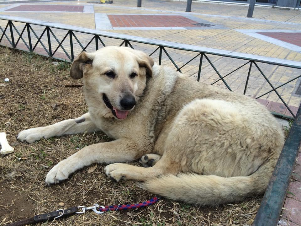 Πέθανε ο Αρκούδος, o πιο γνωστός σκύλος της Νέας Σμύρνης!
