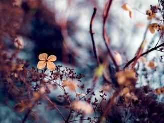 Οκτώβριος: Η καρδιά του φθινοπώρου