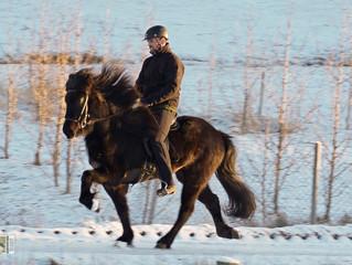IS2011282345 - Þeba frá Kjartansstöðum
