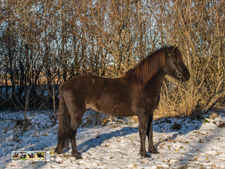 There is a high demand for quality horses, this year  We have been doing quite well in selling horse