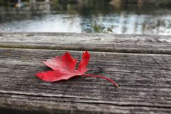 """Fall"" - Ann Arbor, MI"