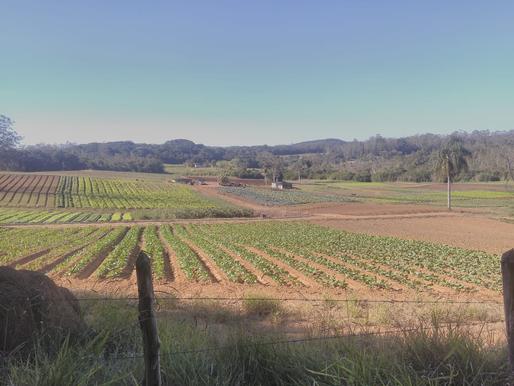 Plano Diretor: Uma nova vida agrícola em São Paulo.