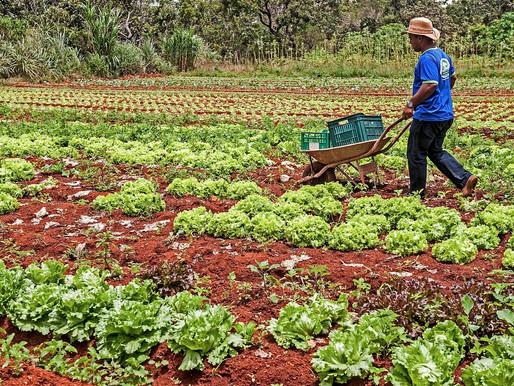 Agricultura familiar no Brasil: uma protagonista esquecida