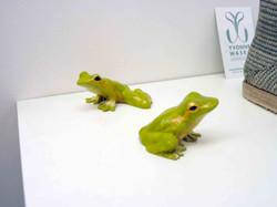Petites grenouilles