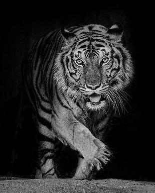 Le lion est le symbole de l'Expérience somatique