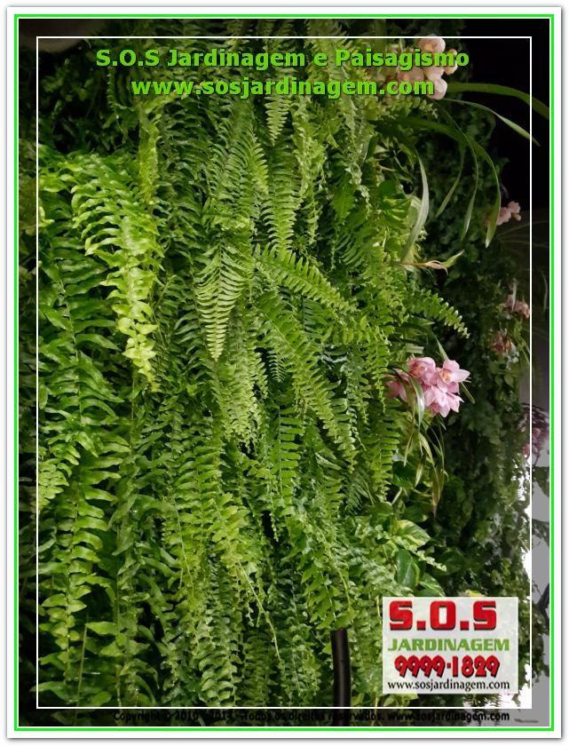 S.O.S Jardinagem 20180723_223649