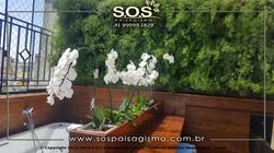 Parede Verde de Aspargo e Orquidea 20180208_113329