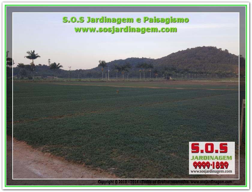 S.O.S Jardinagem 20180720_172211