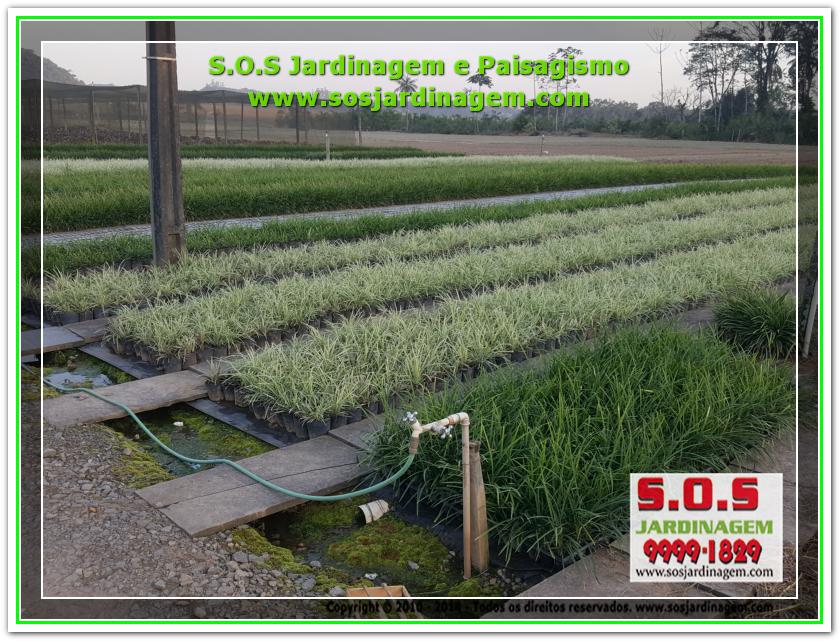 S.O.S Jardinagem 20180720_171017