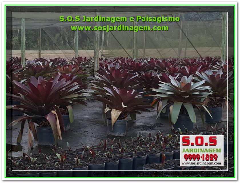 S.O.S Jardinagem 20180720_172743