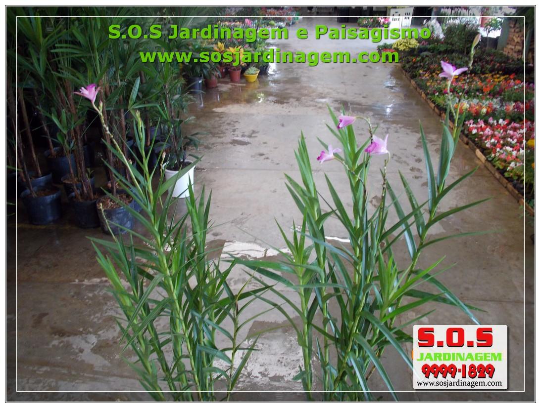 S.O.S Jardinagem 00878.jpg