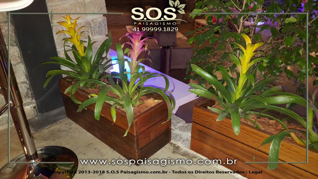 Cachepôs de Madeira 20180325_221713