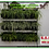 Thumbnail: Jardim Vertical