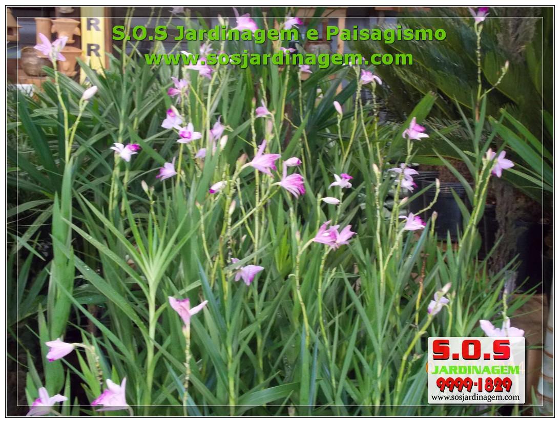 S.O.S Jardinagem 00877.jpg