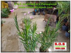 S.O.S Jardinagem 00880.jpg