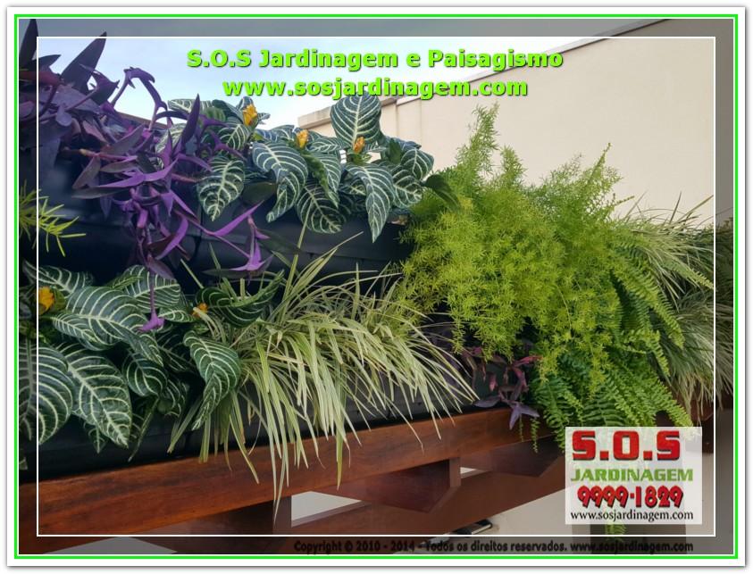 S.O.S Jardinagem 20170626_163719
