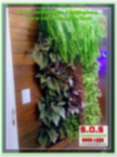 Parede Verde -20_06_20168 Projeto S.O.S Jardinagem e Paisagismo em curitiba .jpg