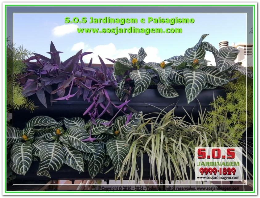 S.O.S Jardinagem 20170624_161849