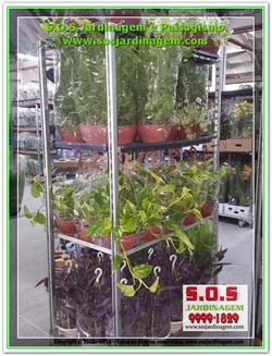 Plantas Jardim  20180802_123641