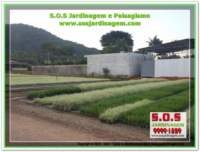 S.O.S Jardinagem 20180720_172716
