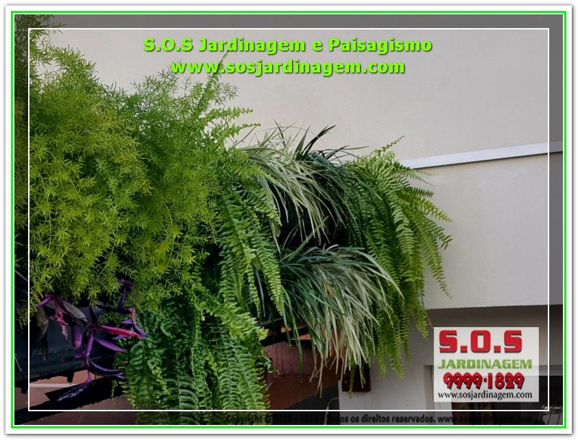 S.O.S Jardinagem 20170624_170612
