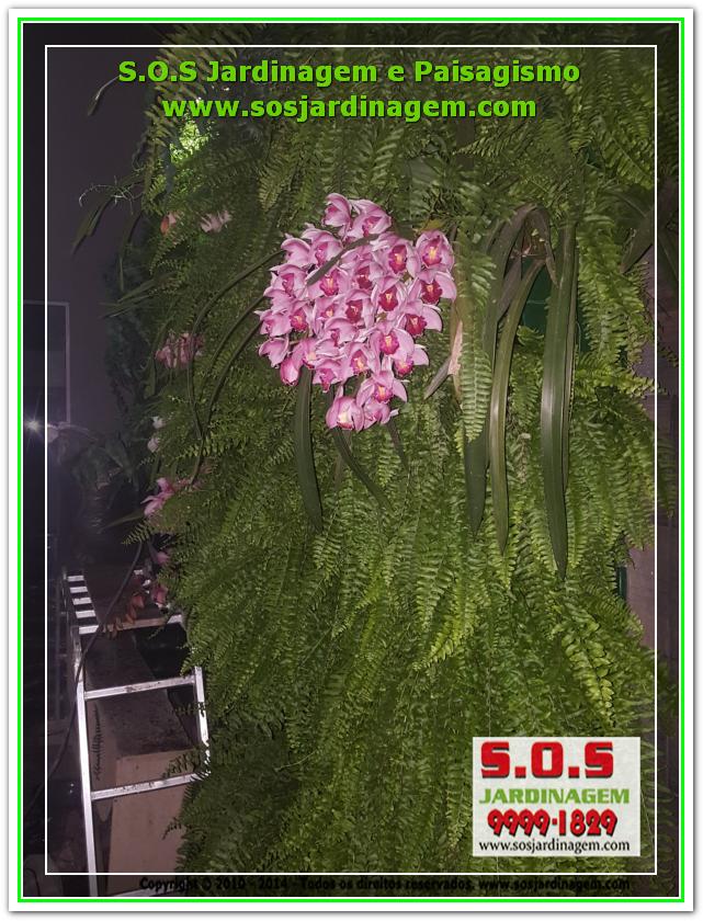S.O.S Jardinagem 20180722_203712