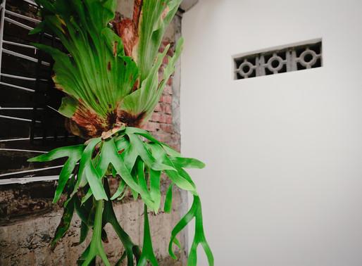 植物與老工藝