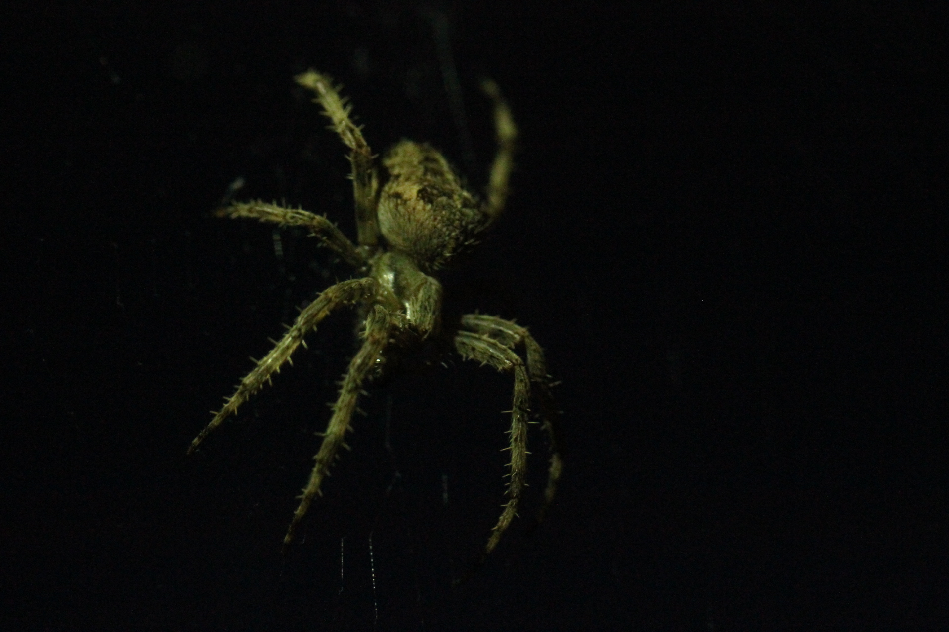 The night time spider