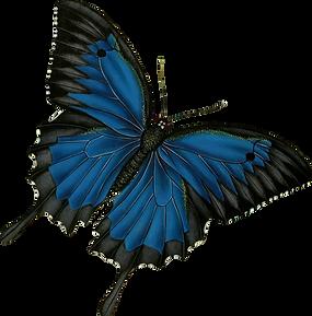 Papilio-Illufses_edited.png
