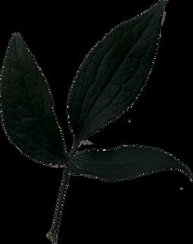 Shadow Leaf.png