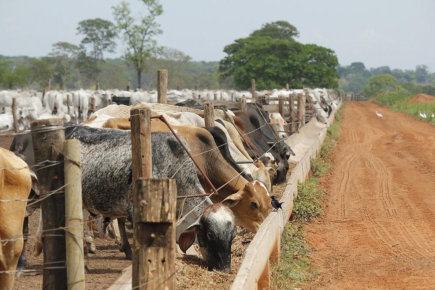 livestock-4050651_1920.jpg