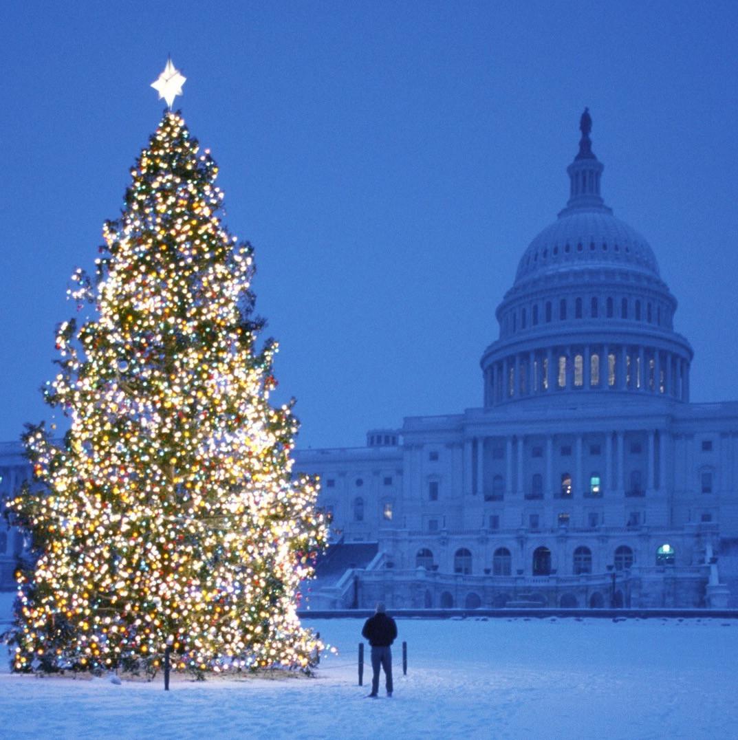 Winter Whitehouse
